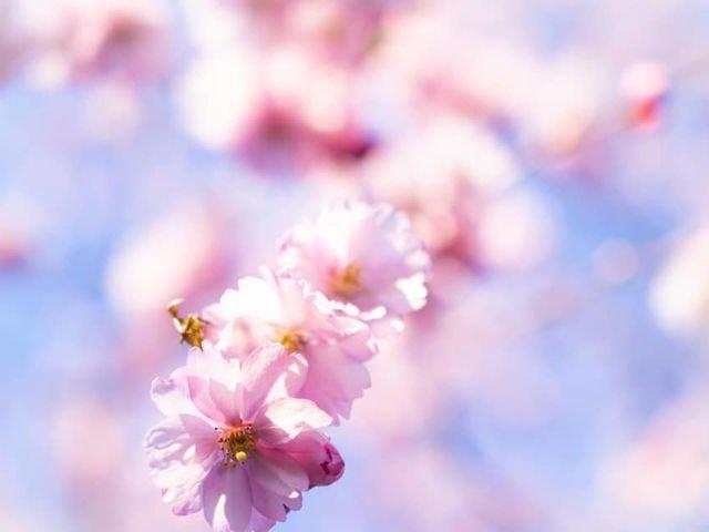 Mukavaa ja aurinkoista vappua kaikille 🎈☀️🥳   *kuva viime vuodelta, mutta kohta ne kukkii tänäkin vuonna!